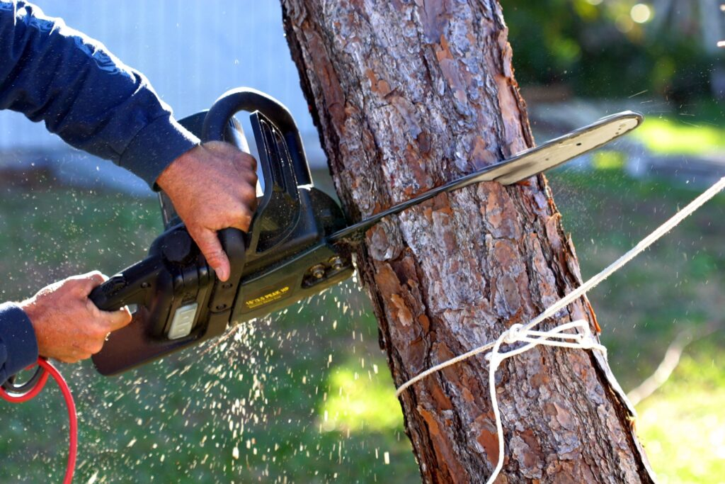 Can Removal of a Tree Get you in Trouble